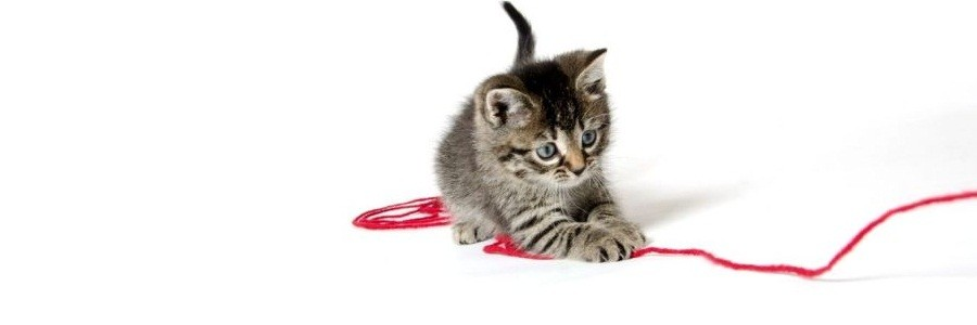 Cute Tabby Kitten With Yarn
